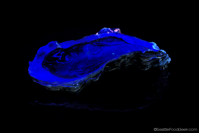 blacklight oyster
