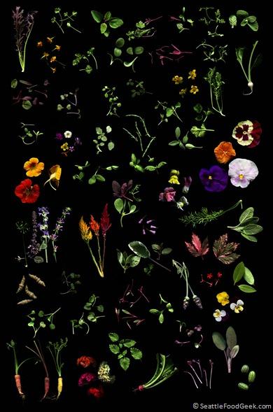 Microgreens Collage